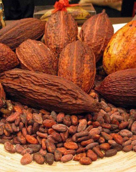 cocoa-4_3