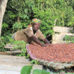 Non-paid cocoa farmers urged to appeal to LBC district offices